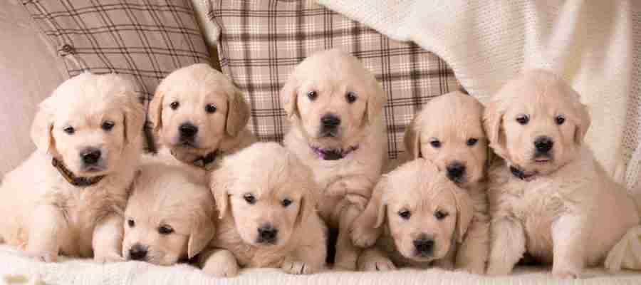 breeders club