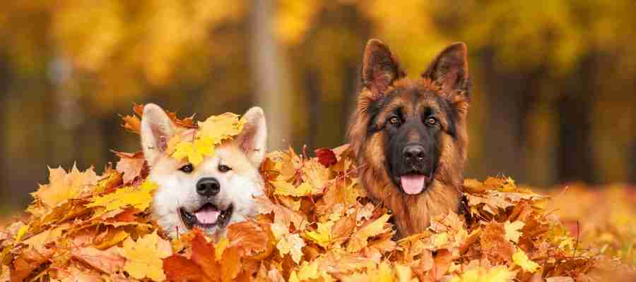 getting your dog ready for autumn