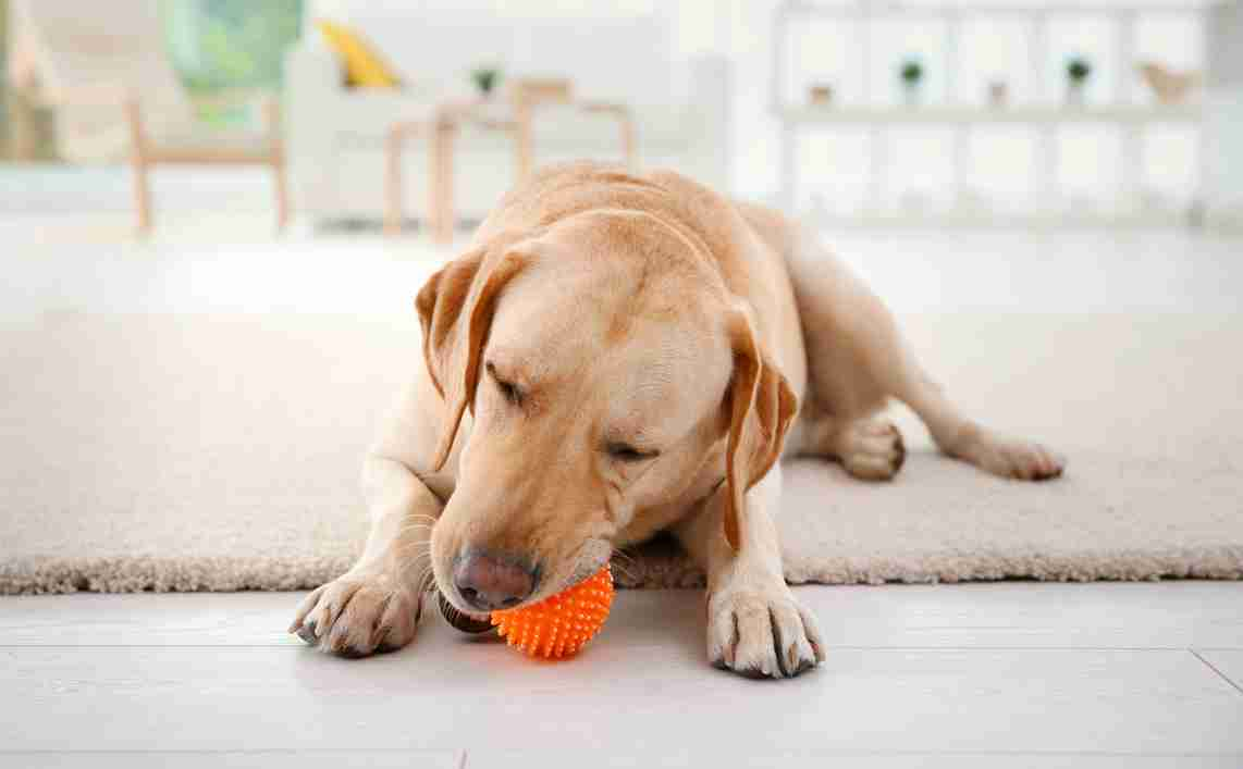 indoor games to play with a dog