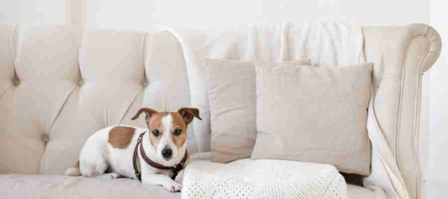 should a dog be allowed on the couch