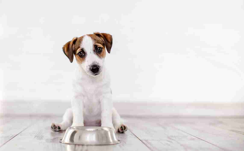 are dogs omnivores or carnivores