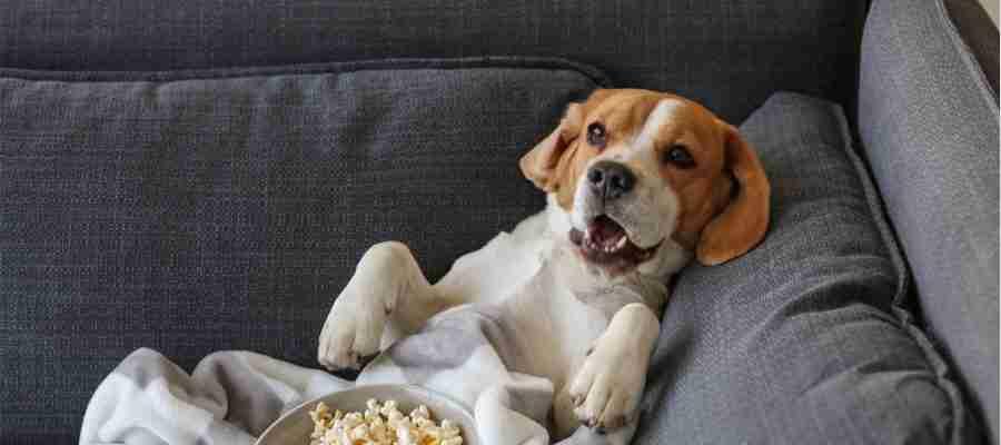 top 4 dog movies